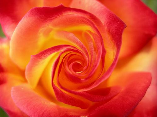 english flower idioms