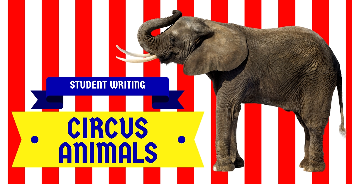 circus animal cruelty essay Circus animal cruelty essay if you have problems with any type of academic assignment, you need to tell us the requirements, and our professional writer will complete a custom essay according to your demands within the preset timeframe.