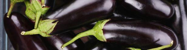 eggplant-or-aubergine-1200x330